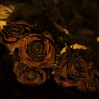 Withered roses Art Prints & Posters by Henrik Wulff Petersen