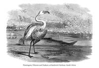 Flamingoes, Pelicans and Duikers