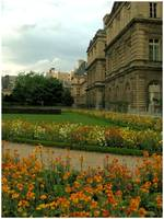 Flowers in Luxembourg gardens