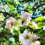 """""""Blossom Love"""" by r0ckstarbby"""