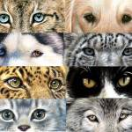 """AnimalEyes"" by ArtsandDogs"