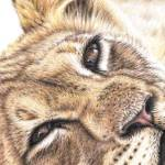 """Animal Eyes - Kalender 2013"" by ArtsandDogs"