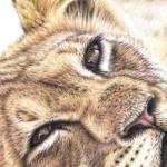 """Animal Eyes - Kalender 2013"" by ArtsandDogs"