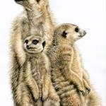 """""""Erdmännchen - Meerkats"""" by ArtsandDogs"""