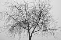 Tree Abstract Black and White