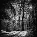 """Mystic forest"" by Marsea"