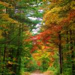 """""""Autumn Path"""" by GBPhotography"""