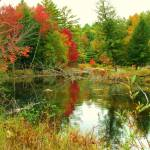 """Autumn Pond"" by GBPhotography"
