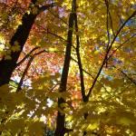 """Autumn Pillars"" by GBPhotography"