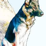 """""""German Shepherd. One"""" by mariancates"""