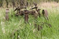 Antique Plow Overgrown in a Field
