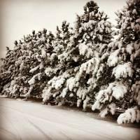 Winter Wonderland Art Prints & Posters by Bobby Ziegler