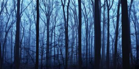 Twilight Forest in Fog