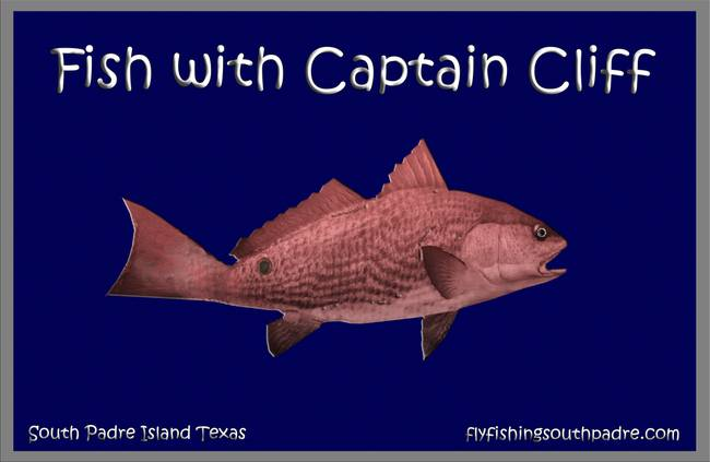 Fish with Capt Cliff