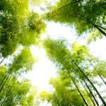 """""""bamboo"""" by zhaoliang"""
