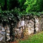 """""""Garden wall"""" by Murphd"""