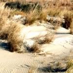 """""""Beach dunes"""" by Murphd"""