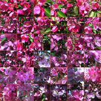 RED BLOOM MOSAIC BY RICHARD LAZZARA
