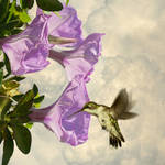 """""""Trumpet Flowers and Hummingbird"""" by spadecaller"""