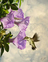 Trumpet Flowers and Hummingbird