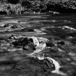 """GoldStream-Salmon"" by Photo-Bob"