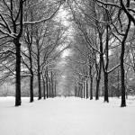 """A Path to ...."" by Photo-Bob"