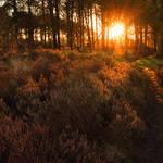 """Sunlight On The Heather"" by ImageMonkey"