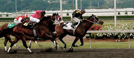 Horse Racing Washington