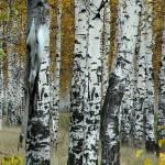 """Birch Tree Forest"" by spadecaller"