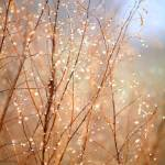 """""""Dewdrop Morning"""" by Groecar"""