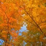 """Autumn Colors"" by VTDarkStar"