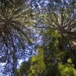 """Redwoods Of Muir Woods"" by cfu1"