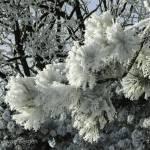 """Frozen Tree"" by simonevanbergen"