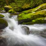 """Roaring Fork Great Smoky Mountains National Park C"" by DAPhoto"
