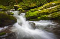 Roaring Fork Great Smoky Mountains National Park C