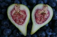 Fig on blueberries