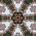 """Tannenbaum"" by sdreyerk1"