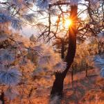 """""""Frosty Sunset"""" by EberlyPhotography"""