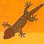 """Gold Gecko"" by kogi"