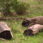 """""""Lonely Logs"""" by photoartful"""