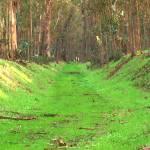 """Abbey Buggy Grass Rug"" by photoartful"