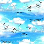 """""""A flock of Seagulls"""" by jt85"""
