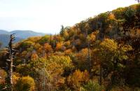 Fall in Shenandoah