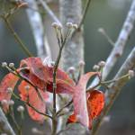 """Next Years Dogwood Blossoms, Last Years Leaves"" by rderder"
