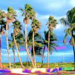 """Miami Palms"" by jt85"