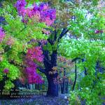 """Fall Colors - Be Faithful Unto Death"" by ethought"