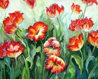 Red & White Parrot Tulips