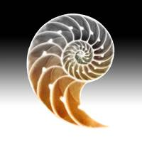 Nautilus Shadow