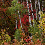 """Autumn Foliage Panorama"" by dkocherhans"