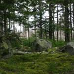 """Misty Forest Glen_0545"" by davies"